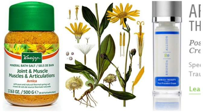 Ingredient Spotlight: Arnica